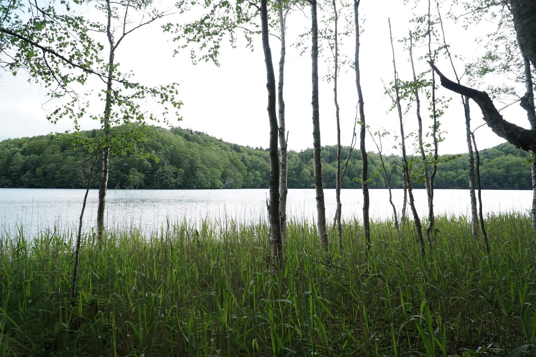 雨後のオンネトー湖周遊コース